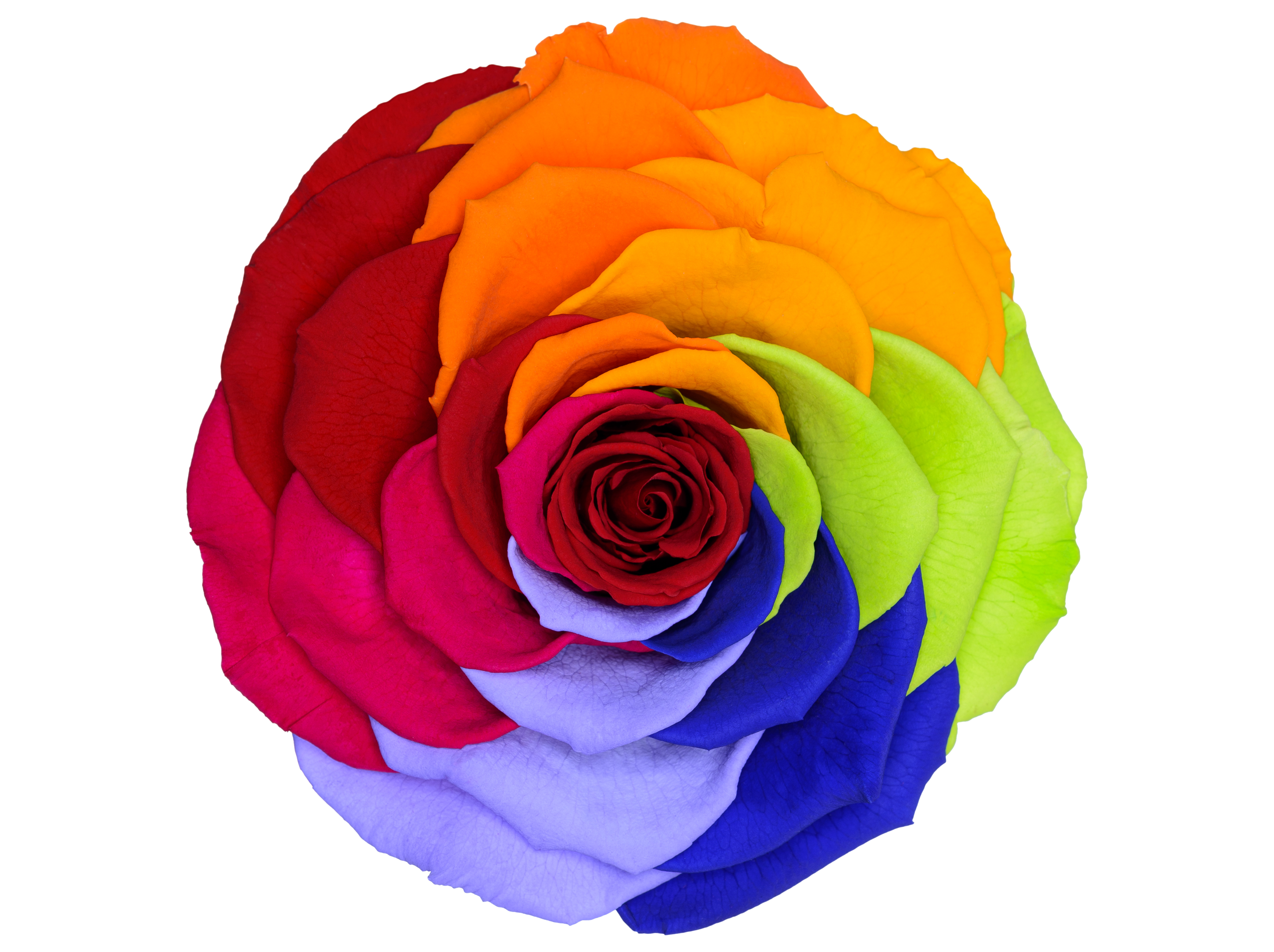 Rainbow Red 02 Transparente