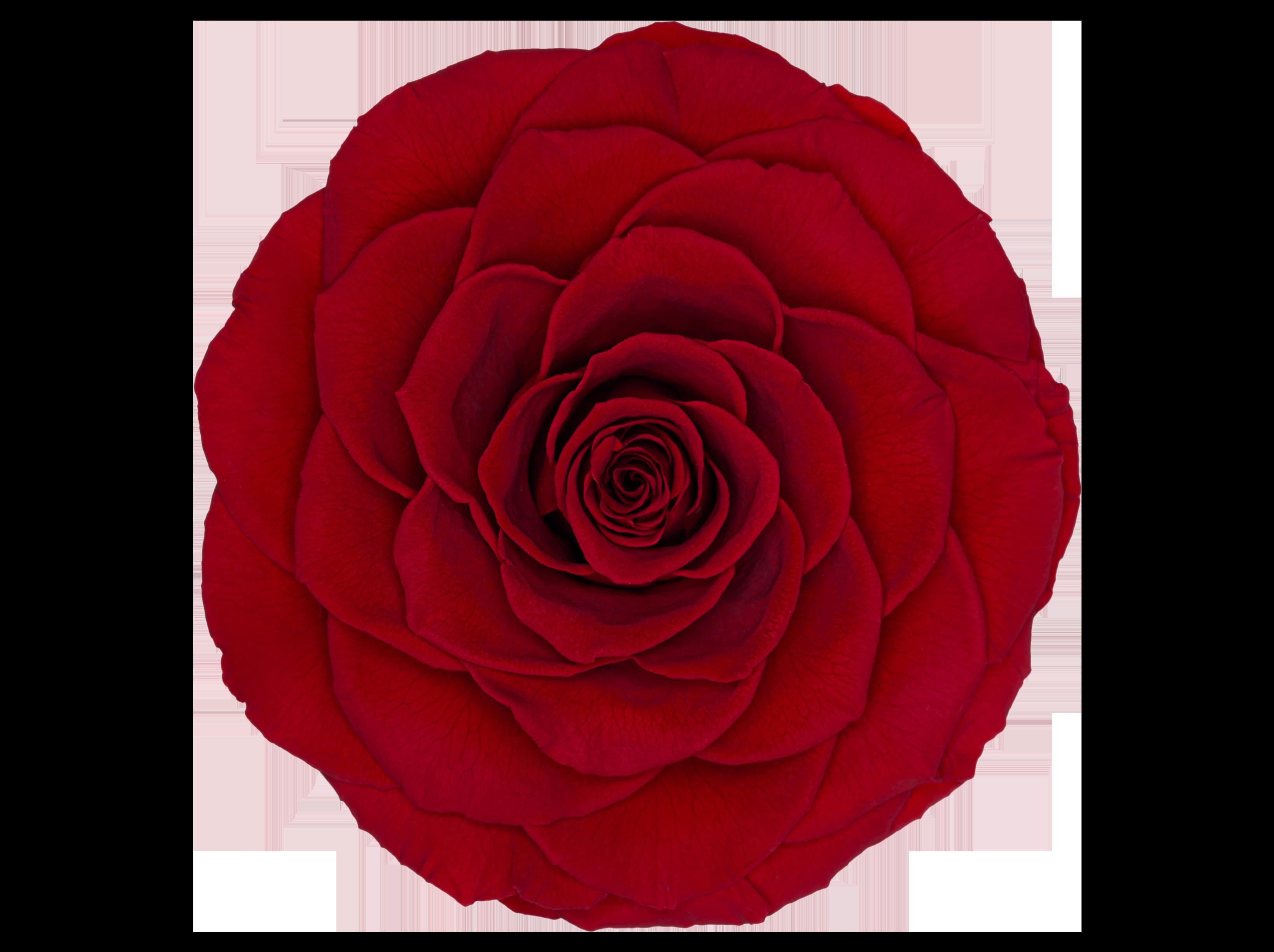 Bonita-Red-02-Frontal-Transparente