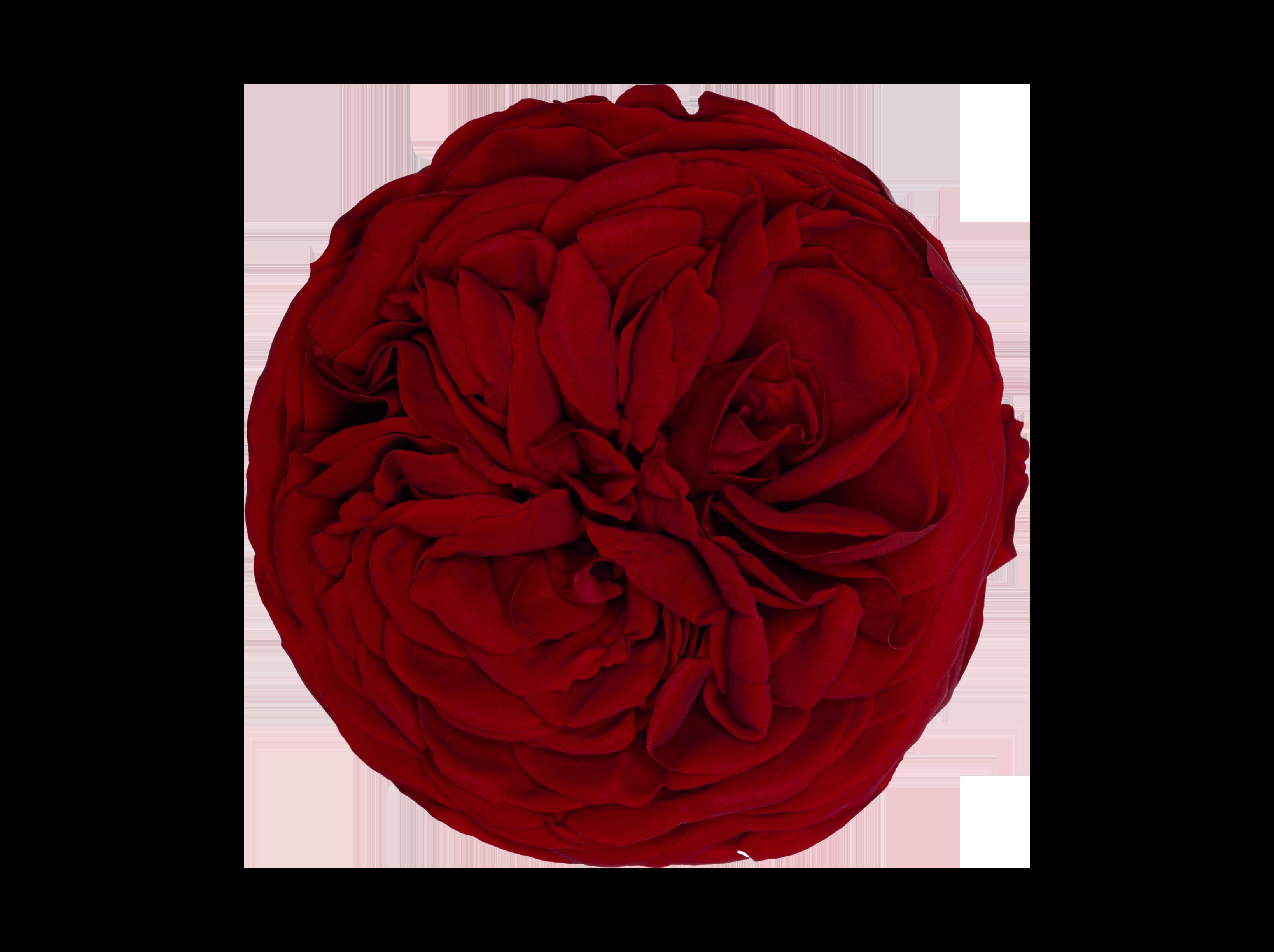 kabukyza-Red-02-Frontal